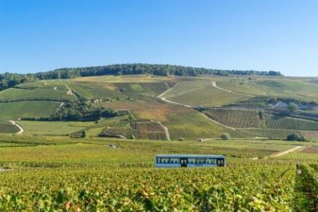 Champagne Deutz  2014 Harvest Report