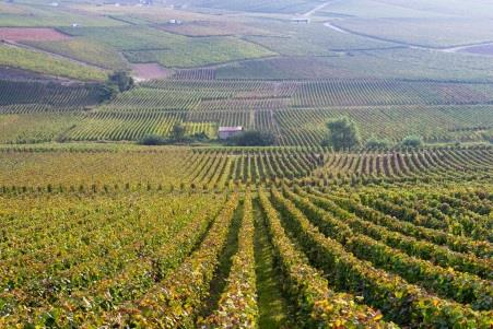 Champagne Deutz  2014 Harvest Report3