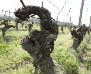 2013年,Bordeaux酒莊實力的試金石