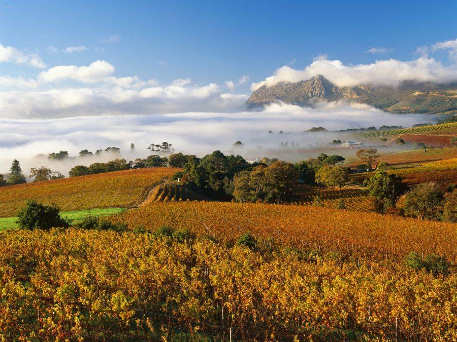 """南非:植根360年的「新世界」酒都 South Africa: 360 Year Old """"New World"""" wine capital"""